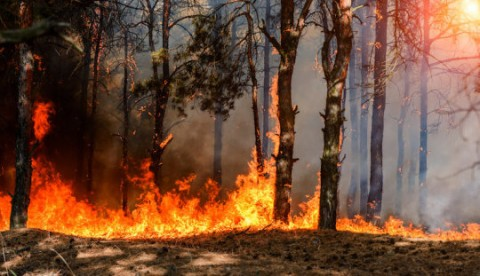 Eastern forests shaped more by Native Americans' burning than climate change