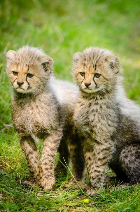 Nature's dangerous decline 'unprecedented,' species extinction rates 'accelerating'
